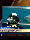Cancer Survivors Scuba Dive with Sharks