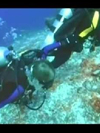 Scuba diving for military veterans